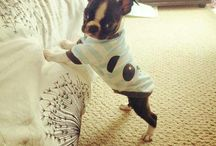 Cutie Pie❤️