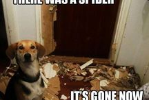 Naughty dogs / Funny dogs misbehaving