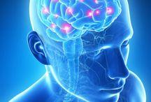 Brain Lebensmittel