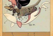 anatomia animali