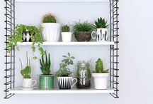 Plant and home decor