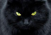 Krásné kočky