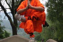 kung fu 4 my baby
