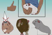 Guinea Piggy / Guinea Pig Info