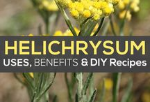 Sahya Helychrysum