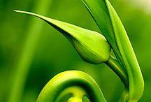 зеленый.салатный.изумруд.