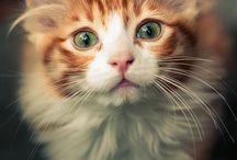 Cats ^3^