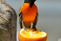 BIRD  FEAST