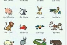 German - vocabulary