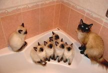 Cute Cats / by Tammy Bond