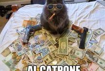 LOL Cats / by Eileen Alexander