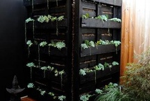 Vertical Gardens and Windows Farming