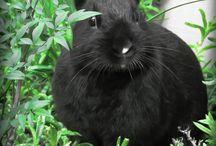 Kaniner og harer