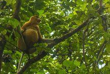 Borneo Malayo