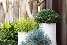 Trädgård - Krukplantering