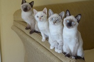 Beautiful Cats / All sorts and types of cats from the smallest to the largest. Cats we all adore and want to run our fingers through their fur.