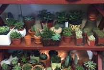 Plantas lindinhas