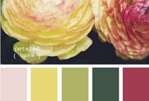Color Inspiration / by Cathy Roach