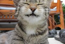 All God's Critters - Kitties/Funny 2 / by Kay Hough