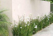garden verges