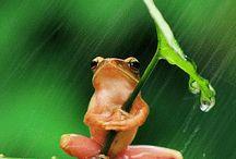 Νηπιαγωγείο: Ένας «έξυπνος» βάτραχος!