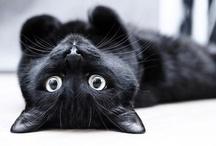 Just cats :p / by Paola Laskar