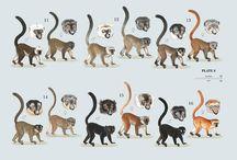 Zoology:wild animals
