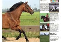 Coupony leert over paarden / Voor als je er nooit genoeg van krijgt om meer van je lievelingsdier te weten te komen..