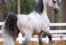 Horses <3 / Everything horses