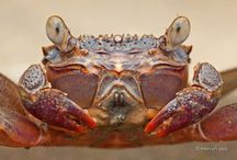 crabby / by Sue Young