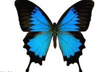 Butterflies / by Jennifer Delgado