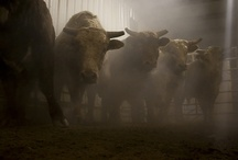 Bulls / by rustikswann