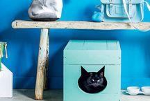 Cats / Cats / by Monica Stocker