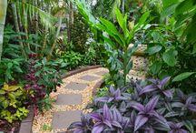 Tropical Garden dream