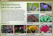 8 best flowering garden plants