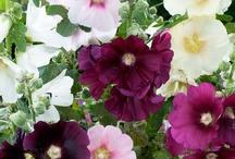 Trädgårdsinspiration / Roliga och trevliga trädgårdsarbeten