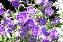 Kwiaty, flowers / Zdjęcia mojego autorstwa.