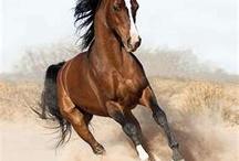 <3 Horses