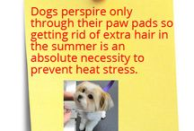 Dog Facts / Here we will give you Tips and tell you different Facts about Dogs.