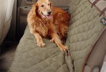Doglove / Dogs, pets