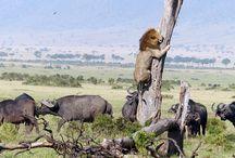 動物の生態