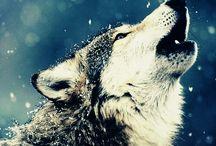 I love huskies