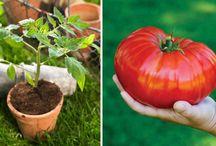 Zahrada-zelenina,květiny, pokojové květiny, babské rady při úklidu, aj...