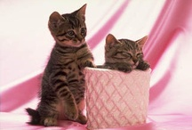 Kittens & Cats / Things that go Meow! / by Kelly Wilson