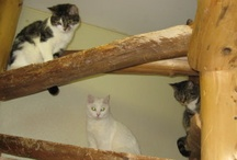 Our Shelter Cats / These are the beautiful cats and kittens we have up for adoption at the Tri-Lakes Humane Society in Lake, NY. For more information, visit our website: tlhsny.webs.com  Like Us on Facebook: www.facebook.com/TriLakesHumaneSociety