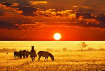 """African Savanna / We have not had the chance to study Africa in-depth yet, but hope to soon! To comply with the US Copyright Office, section 107, all of my Pinterest boards and pins are for """"criticism, comment, news reporting, teaching, scholarship, and research"""" as well as for nonprofit, educational purposes""""... I am not a lawyer, but tried to make sense of this: http://www.copyright.gov/fls/fl102.html"""