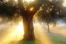 alba-dawn