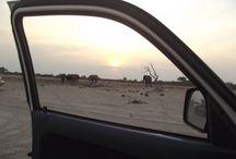 BOTSWANA SAFARIS / Safaris in Botswana