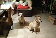 Brandy y Kora / Mis pequeños y sus mejores momentos
