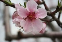Kentucky in Bloom / Enjoying the beauty of Kentucky in the springtime!